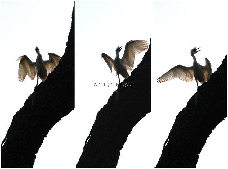 com tree